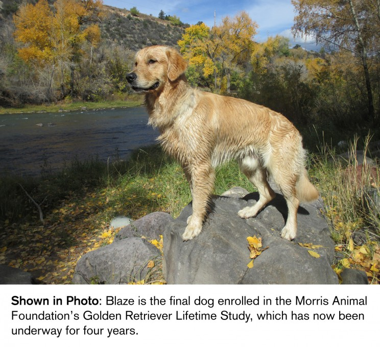 Blaze Morris Animal Foundation