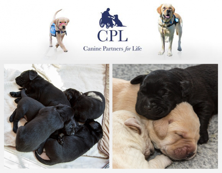 Canine Partners for Life workplace giving and volunteering