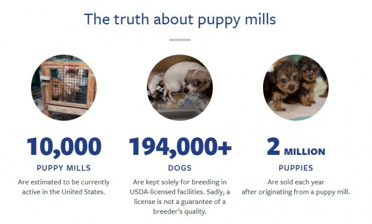 How Businesses and Employees Can Stand up Together and Stop the Horrific Treatment of Dogs at Puppy Mills