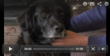 Sense of Smell & Training Make Service Dogs Life-saving Best Friends